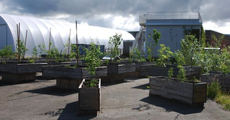 Evergreen Urban Orchard is now open at GNW