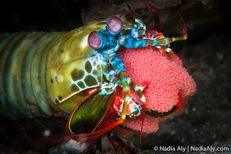 Nadia Aly's Photo of a Colourful Fish